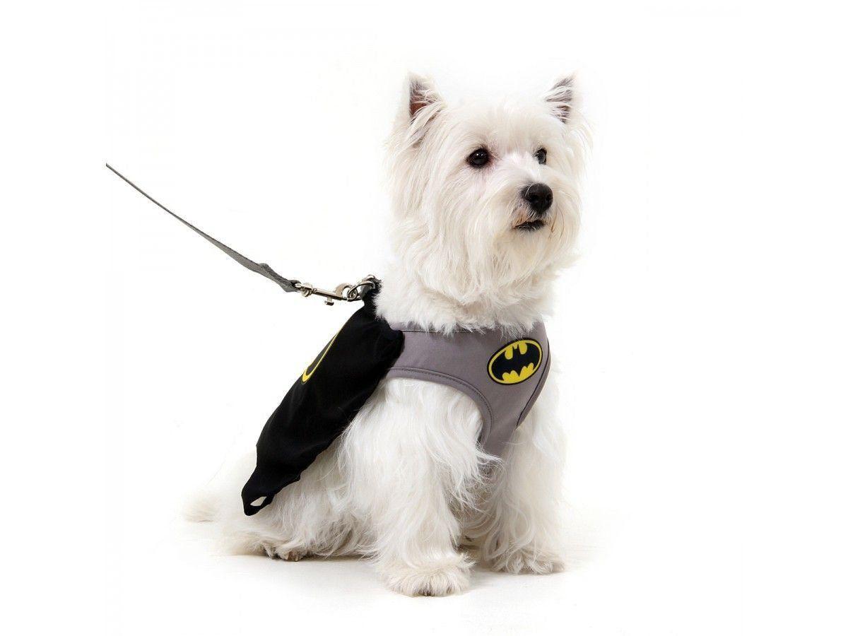 Kit Coleira Peitoral + Guia Batman™ para Cachorros