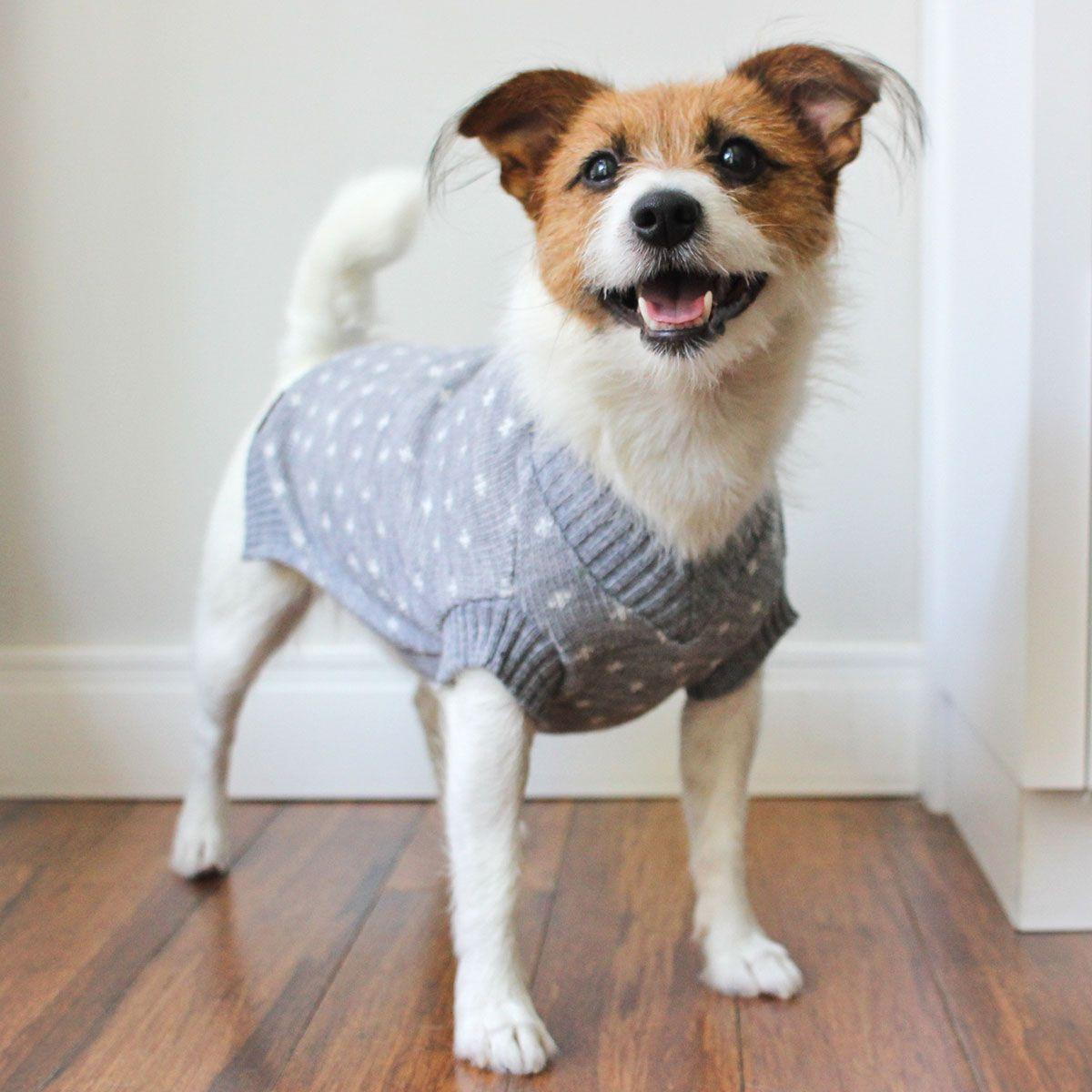 Roupa de Tricô Poá para cachorro Hello Pets Pontinhos