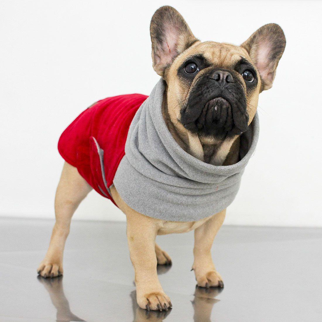 Roupa para Bulldog Francês Hello Pets
