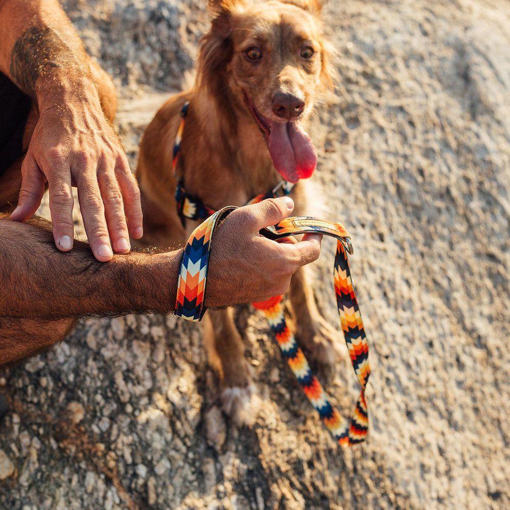 Super Guia para cães Inti Cachorreiros