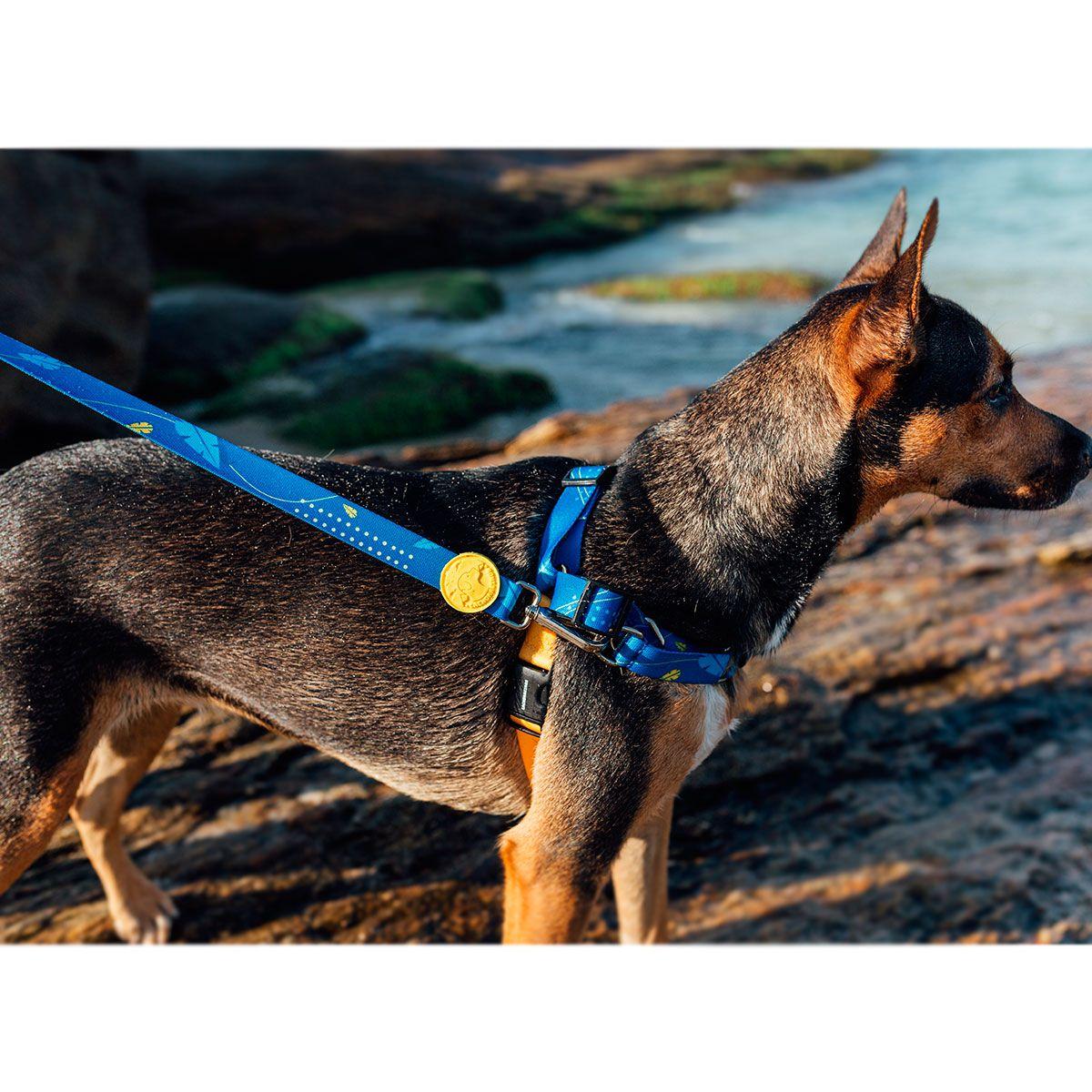 Super Guia para cães Olivia Indigo Cachorreiros