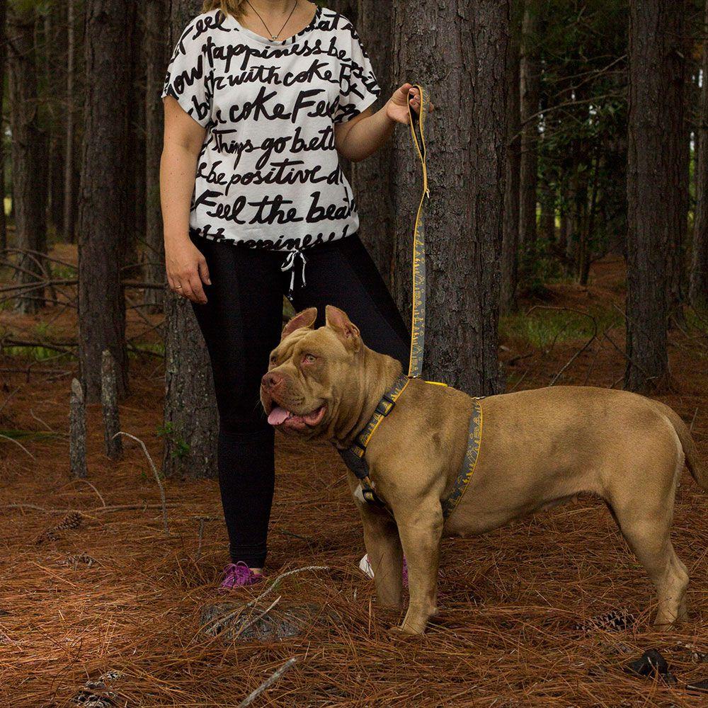 Super Guia para cães Outdoor