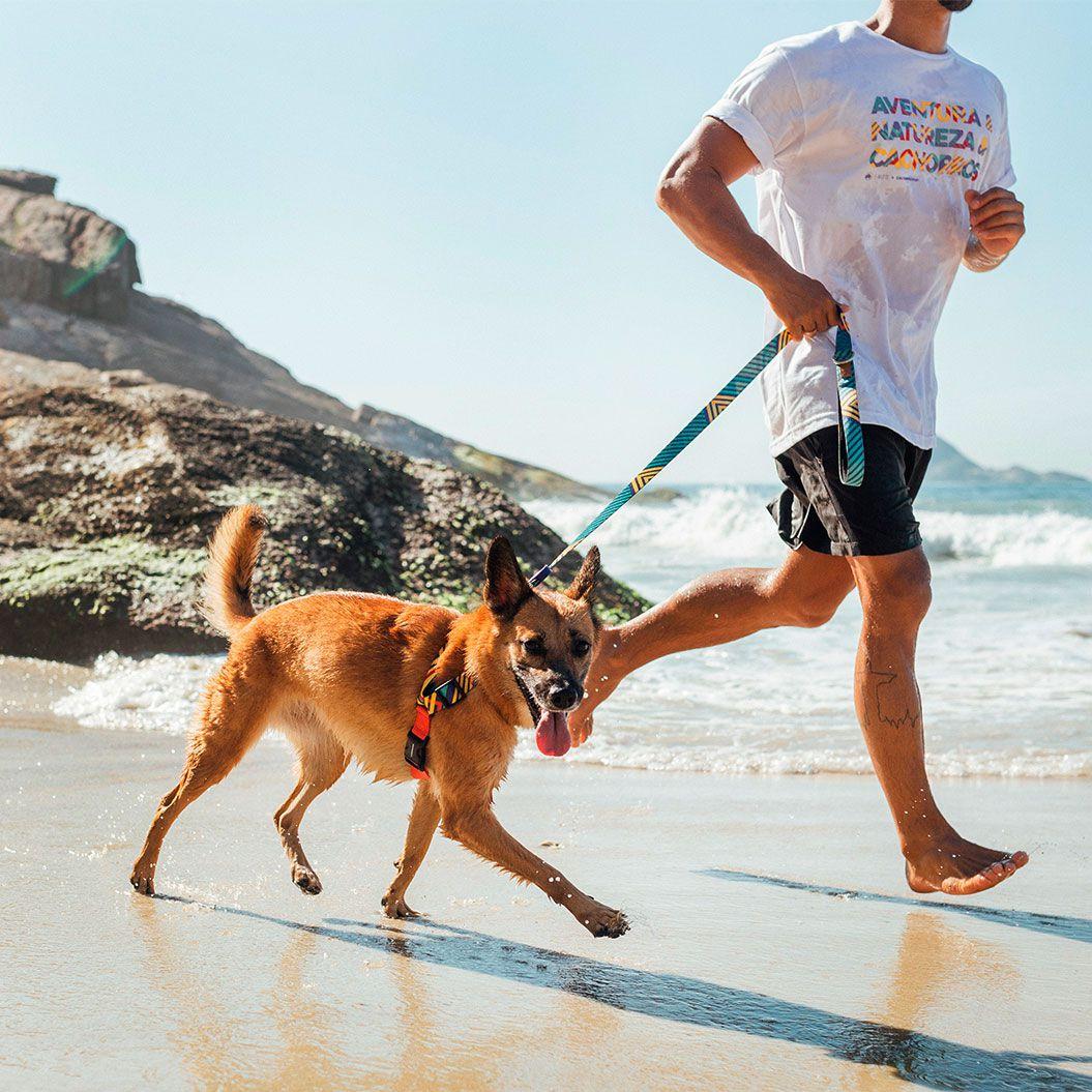 Super Guia para cães T-Mutts Cachorreiros