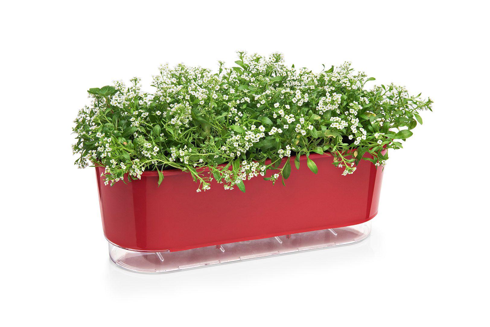 Jardineira Autoirrigável  Vermelho Raiz