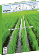 Arroz: do Campo à Mesa - Informe Agropecuário