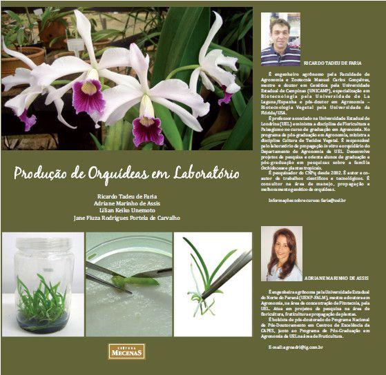 Produção de Oquídeas em Laboratório