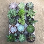Mix plantas