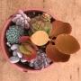 Mix plantas baby (sem raiz)