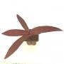 Trapoeraba  roxa ( tradescanthia)
