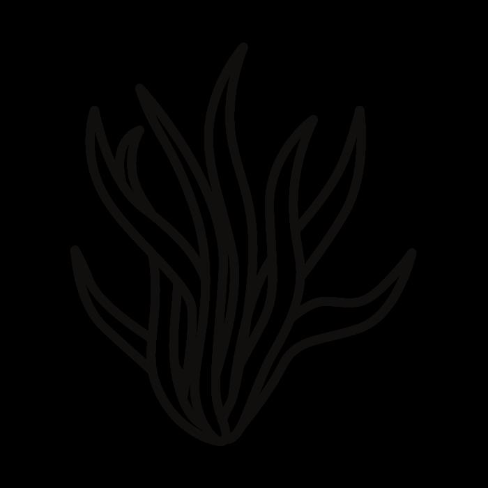 Alga Marinha