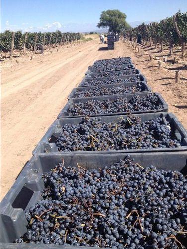 Vinho Argentino Malbec Goulart Winemaker´s Selection X 2 Gfs