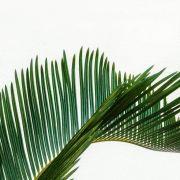 Quadro Decorativo | Arte Folha de Palmeira