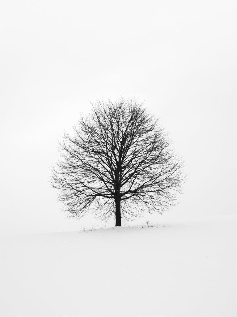 Quadro Decorativo | Arte Árvore no Inverno
