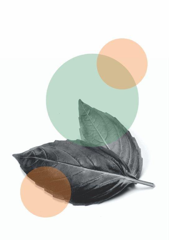 Quadro Decorativo | Arte Folhas com Formas Geométricas