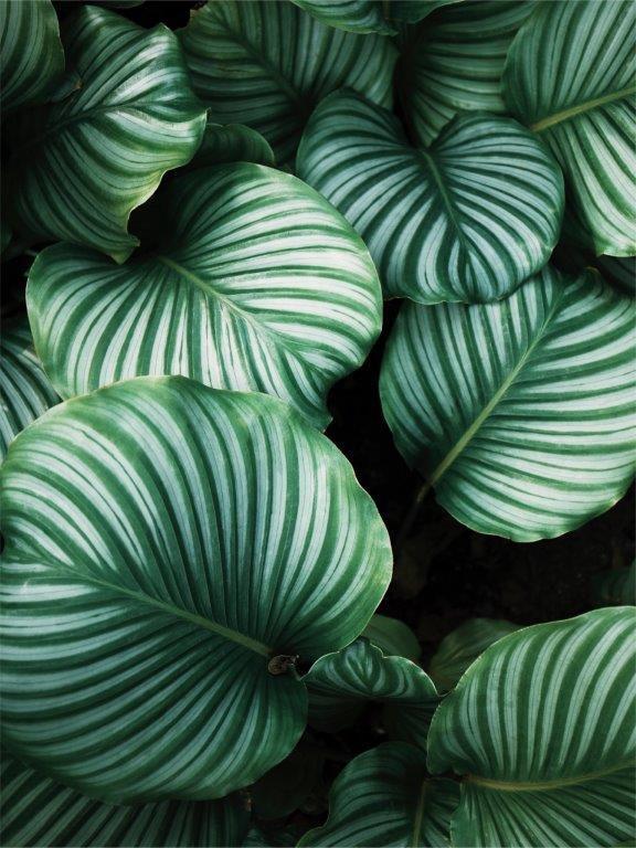 Quadro Decorativo | Arte Folhas Verdes