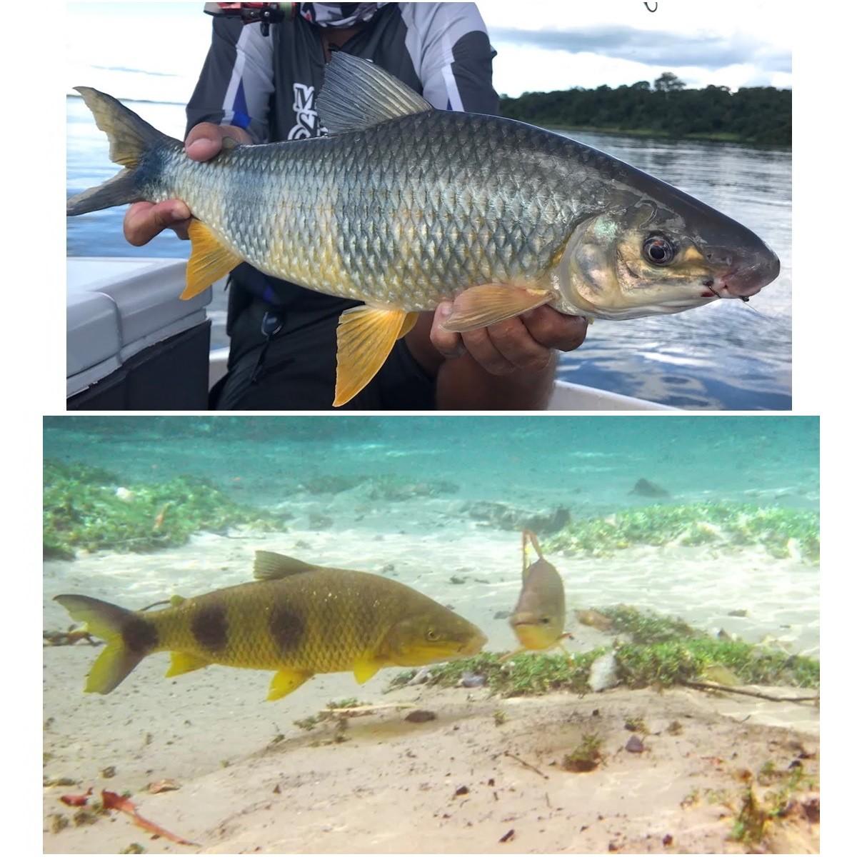 Kit de Pesca Básico Pescaria Completa Maleta Linha Anzol e Itens
