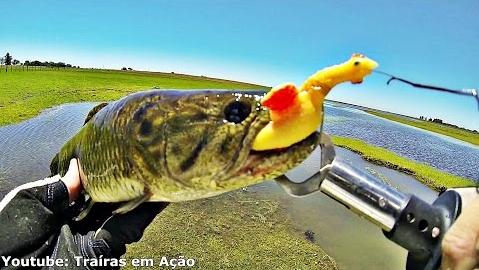 Kit Pesca Alicate Contenção Boga Grip Pega Peixe Balança