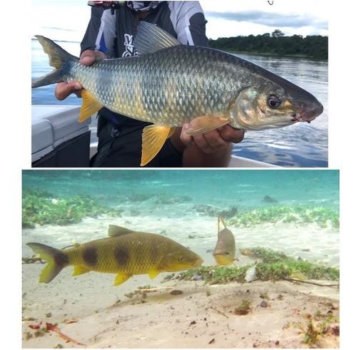 Kit Pesca Pescaria Completa 2 Varas 2 Molinetes Com Itens