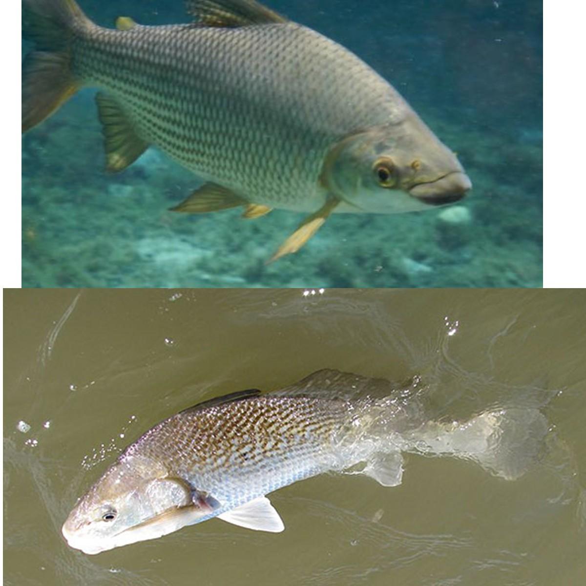 Vara De Pesca 1,70 20-25lb Para Carretilha E 300m De Linha