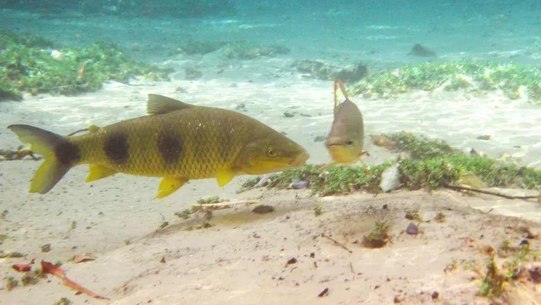 Vara De Pesca Completa 1,80m Molinete Linha Pronto Pescar