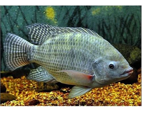 Vara De Pescar Completa 1,35m 4-12lb Molinete 4000 3 Rol