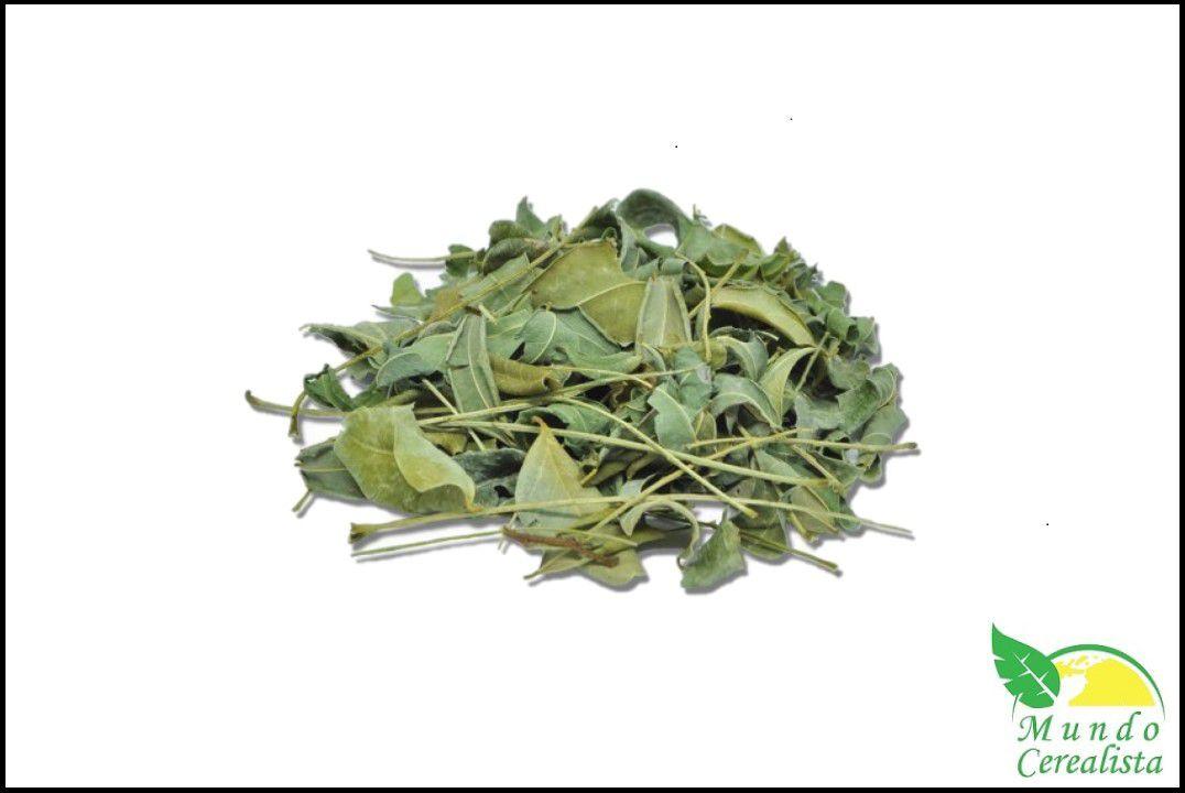 Moringa Oleifera em Folhas - Granel  - Mundo Cerealista