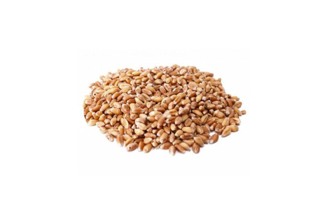 Trigo em Grãos - Granel  - Mundo Cerealista