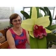 Orquídea Blc. Memoria Helen Brown