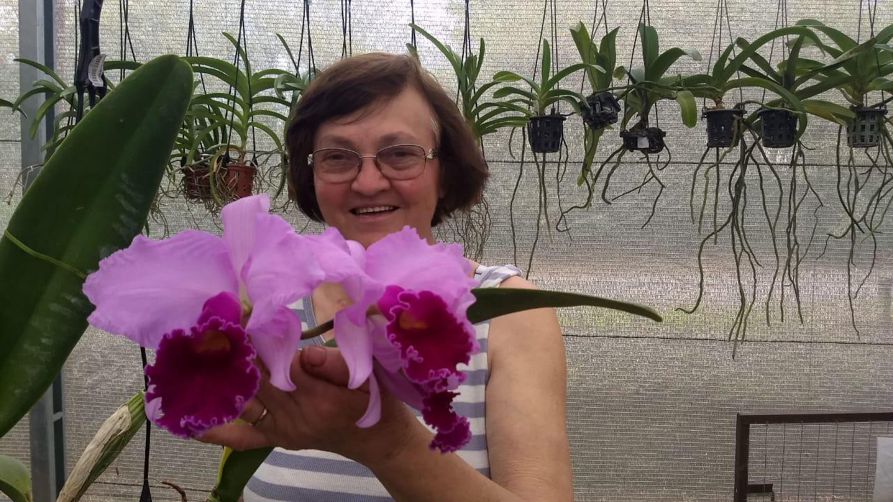 Pacote n º 01 Orquídeas Outubro Rosa