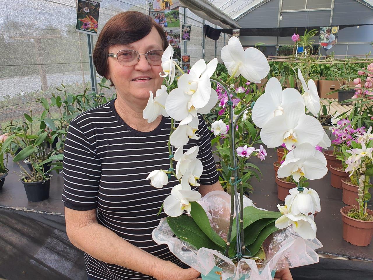 Pacote com 5 cattleyas, 5 Orquídeas diversas, 5 Phalaenopsis + 1 Cattleya de brinde