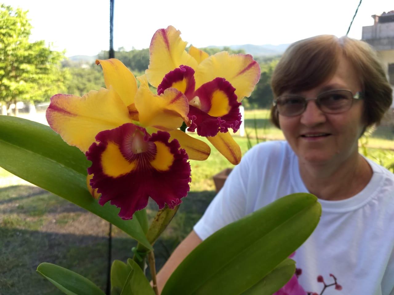 Pacote Relâmpago com  8 Cattleyas + 1 Dendrobium Nóbile por R$ 399,00