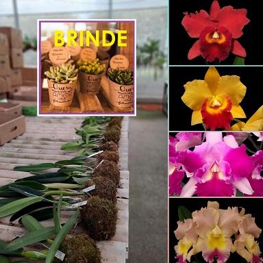 PACOTINHO DE AMOR com 4 Orquídeas e 4 SUCULENTAS de BRINDE + FRETE GRÁTIS