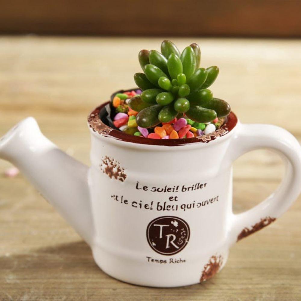 Vaso De Ceramica Regador Branco Plantas Suculentas