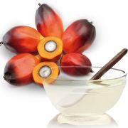 Oleo de Coco Palmiste - 100g