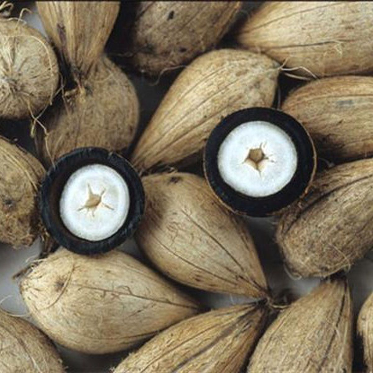Manteiga Vegetal de Murumuru - 30g