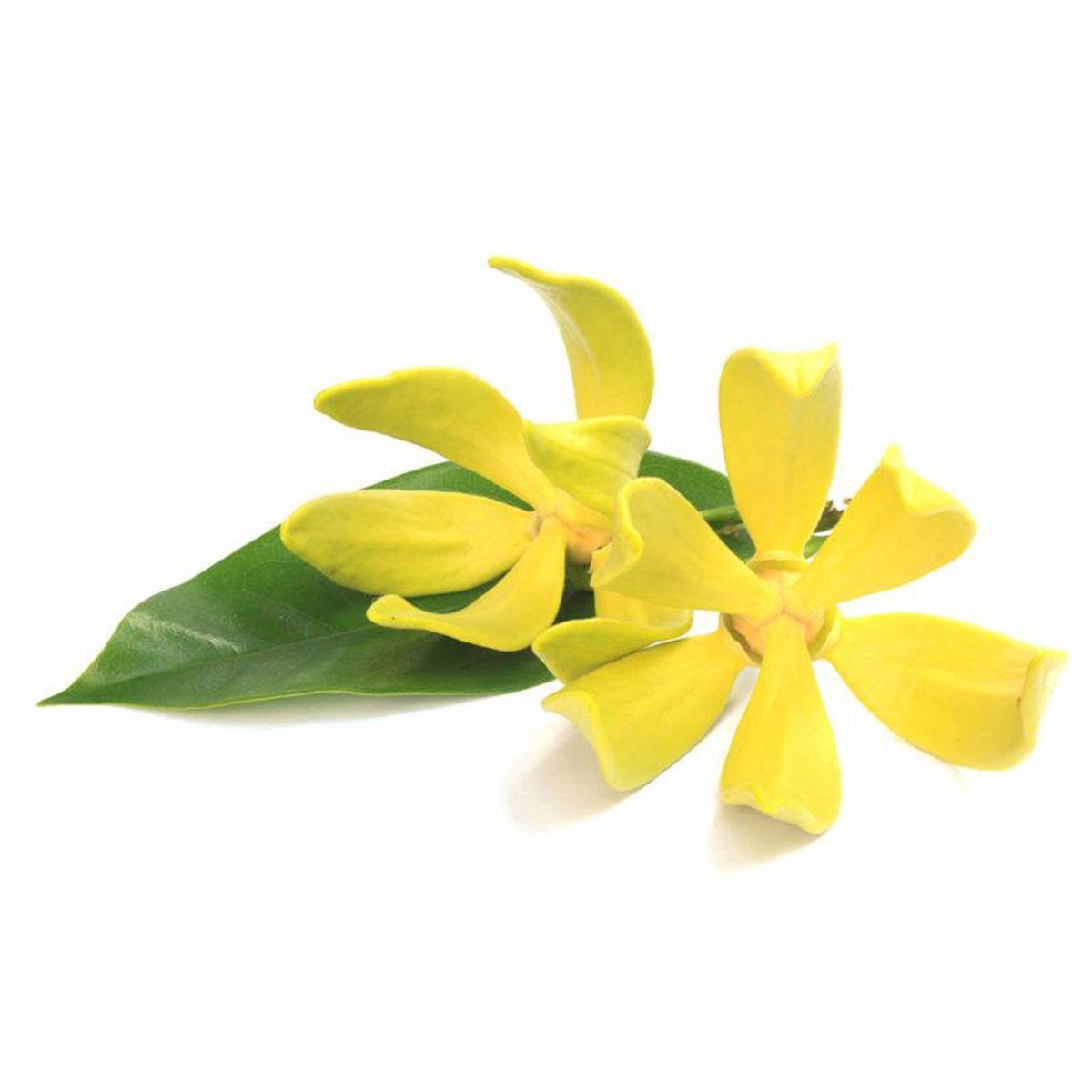 Óleo Essencial de Ylang-Ylang 5ml