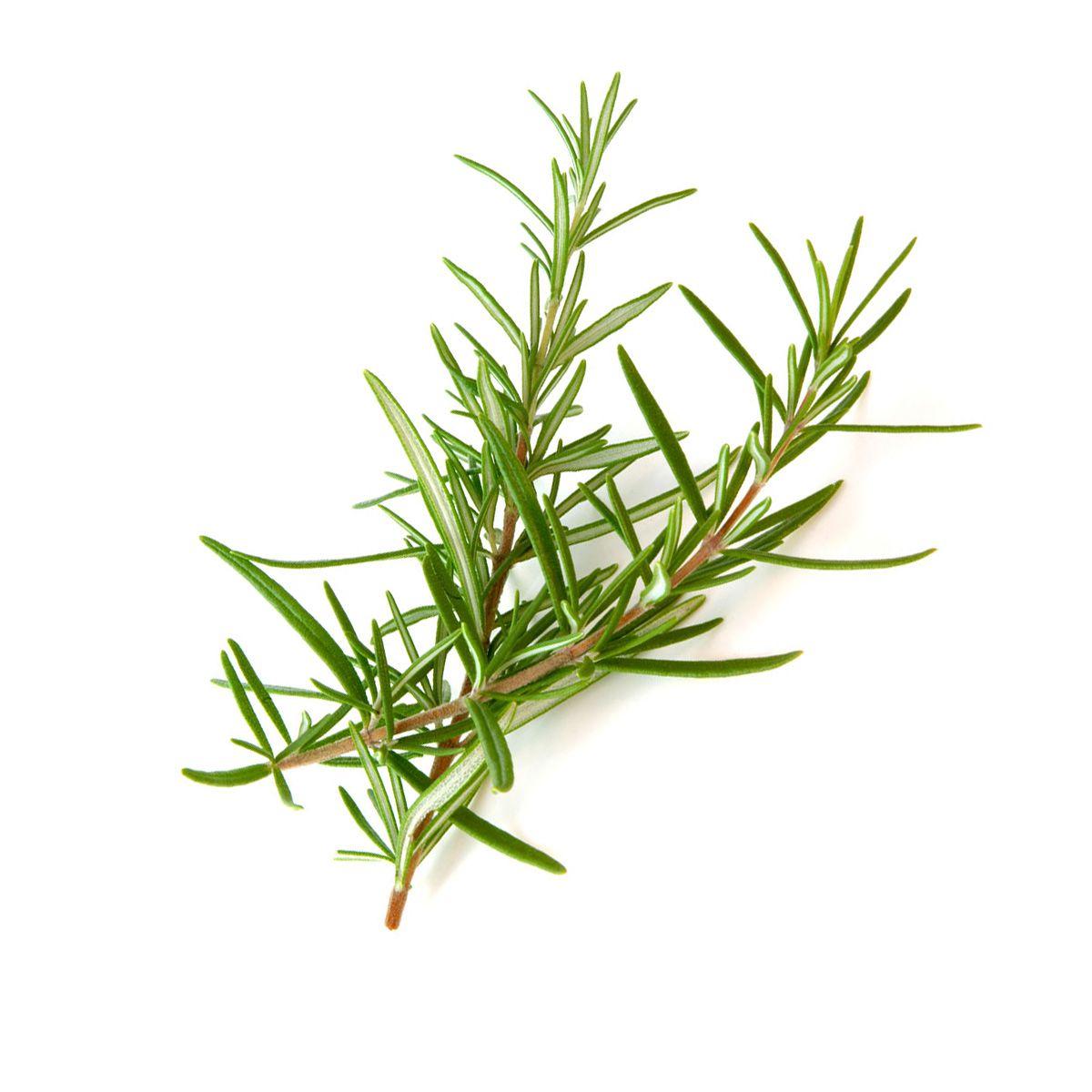 Óleo Vegetal 100% puro de Alecrim 30ml