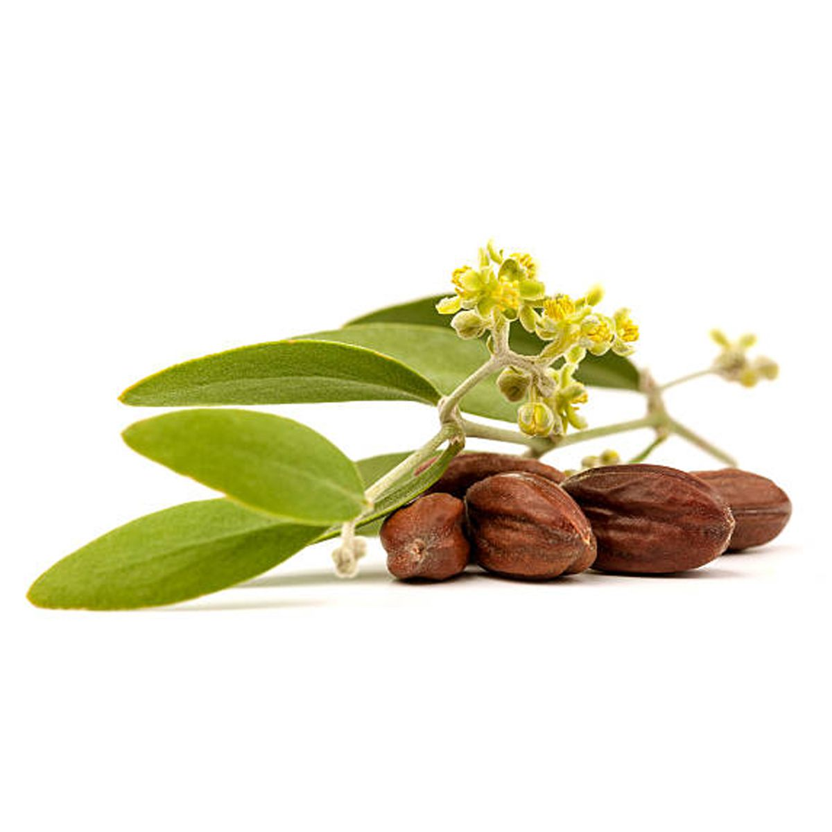 Óleo Vegetal 100% puro de Jojoba 30ml