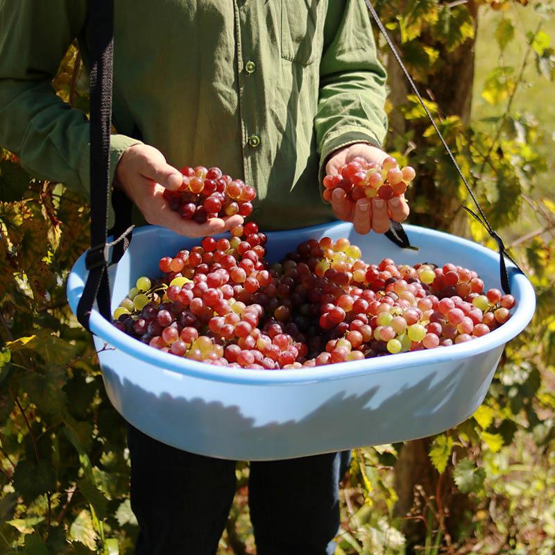 Caixa Plástica com Alça Conforto para Colheita de Uvas