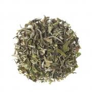 Chá Branco (Camellia Sinensis)