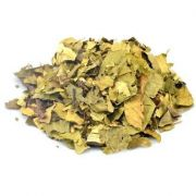 Nogueira Chá (Juglans Regia)