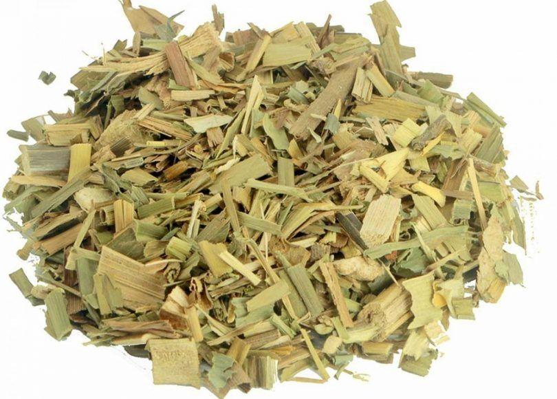 Cana do Brejo Chá (Costus spicatus Swartz)