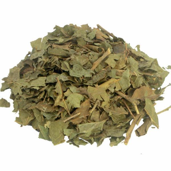 Chá de Bugre (Cordia Salicifolia)