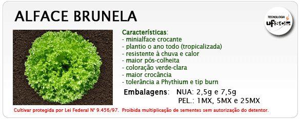 ALFACE CRESPA BRUNELA 7,5 MX