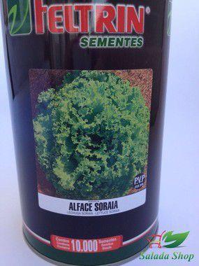 ALFACE CRESPA SORAIA - FELTRIN 1.000 SEMENTES