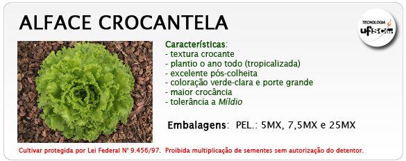 ALFACE CROCANTELA 5.000 SEMENTES