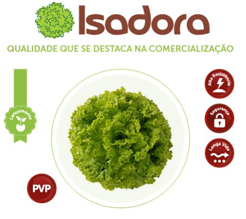 SEMENTE DE ALFACE ISADORA  SAKATA