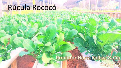 Semente Rúcula Rococó - TECNOSEED 50 gramas