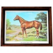 Quadro Decorativo Importado Quarter Horse