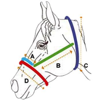 Cabresto e Cabo Boots Horse em Nylon Azul Marinho